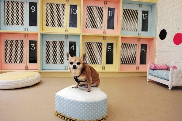 Como Montar Um Hotel Para Cahorros Cahorros Como Hotel Luxurydogkennelpethotel Montar In 2020 Haustiere Hundepension