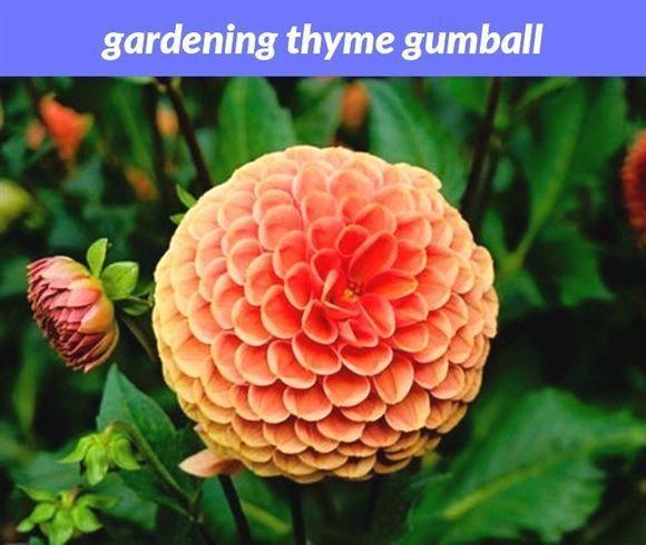Food Tips In Hindi Gardeningtipsforseptember Dahlia Flower Beautiful Flowers Photos Flower Images