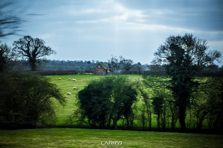 Train Sheep by Larry Jordan on 500px