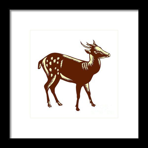 Philippine Spotted Deer Woodcut Framed Print by Aloysius ...