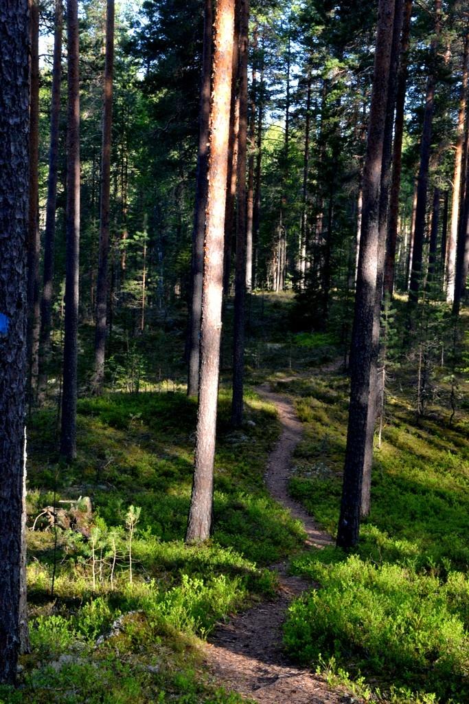 Pieni polku metsän läpi vie Luupään lenkillä Leivonmäen kansallispuistossa.