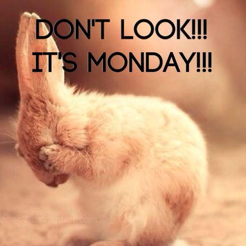 Mondays always start slow...