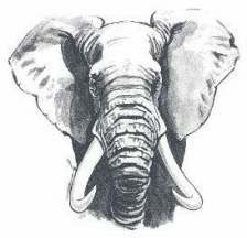 Best Tattoo Elephant Head Realistic Ideas