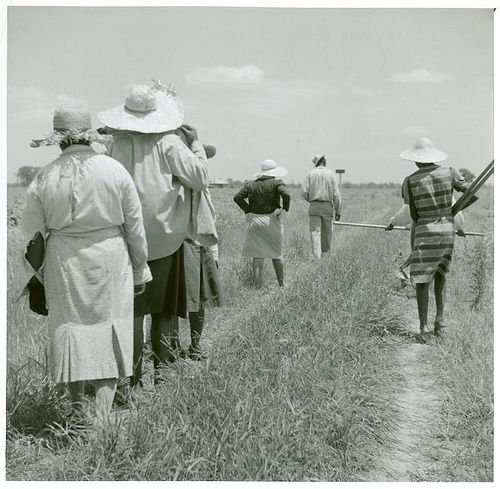 [African American cotton plantation workers, hired as day laborers