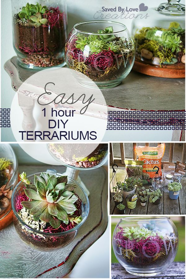 Easy Terrariums in under 1 hour @savedbyloves