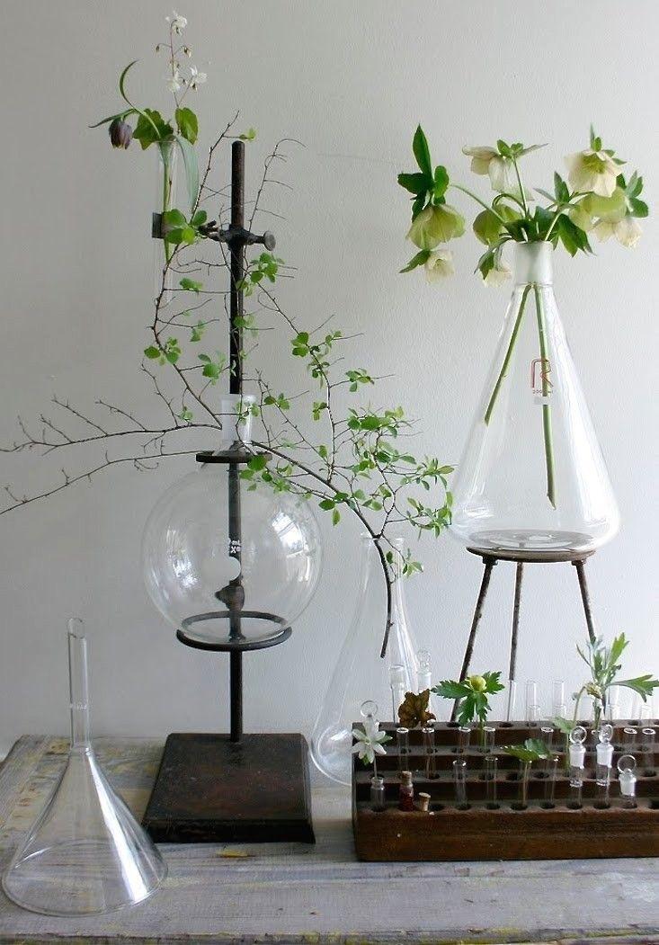 Labware plant stands   Gardenista