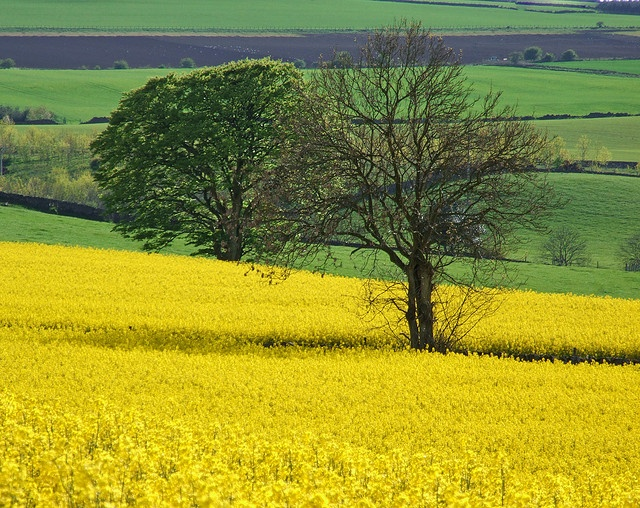 Fife, Scotland by Victoria Cormie, Flickr