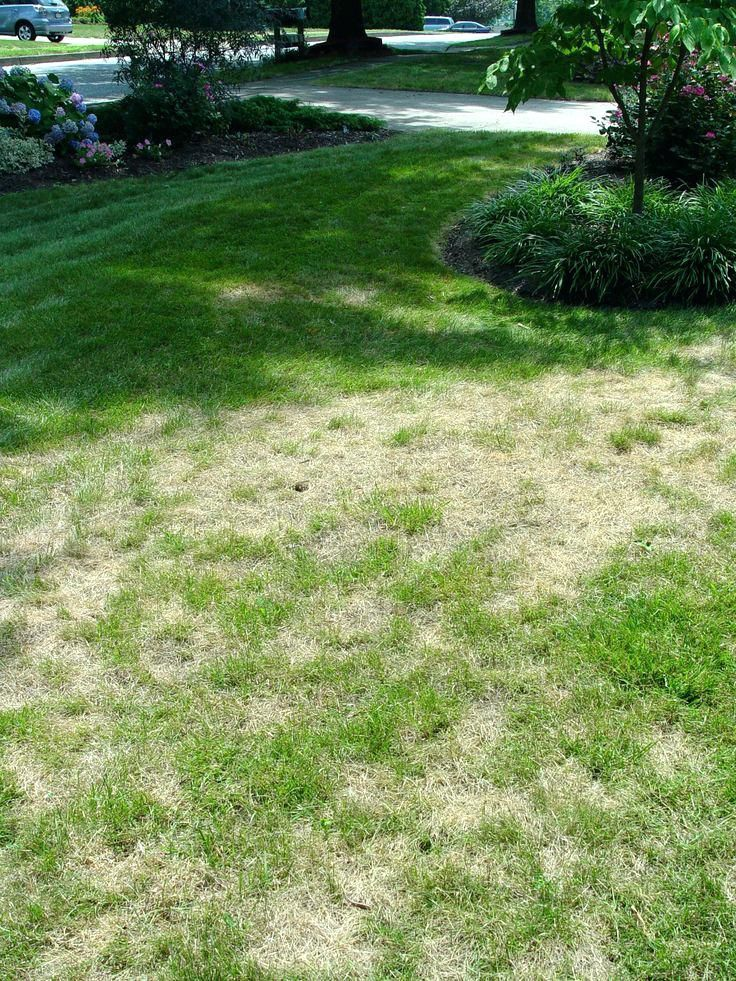 Peat Moss Lawn Peat Moss Roller Peat Moss Lawn Patio Area Lawn Repair No Grass Backyard Lawn