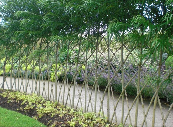 living willow fence: Salix purpureas is most bitter and therefore more deer resistant