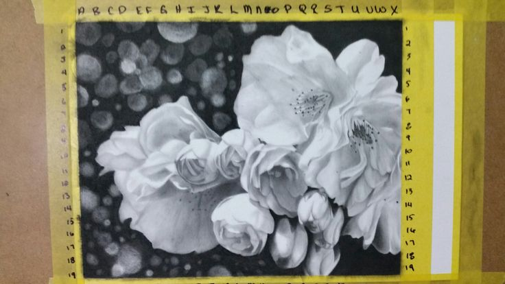 """ Apple Blossoms"" Graphite on Stonehenge paper."