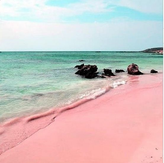 Best 25 pink sand beach ideas on pinterest pink sand for Pink sands beach in harbour islands