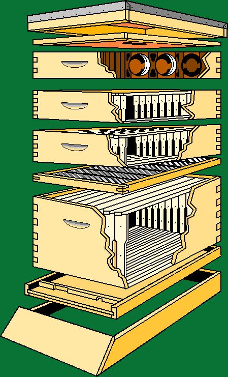 Langstroth Hive | Langstroth Beehive, Analogy of Multiplicity