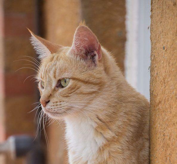 00307-06092015-trifolium gatos mistica