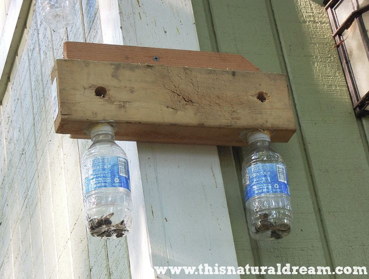 carpenter bees - a simple DIY trap - This Natural Dream