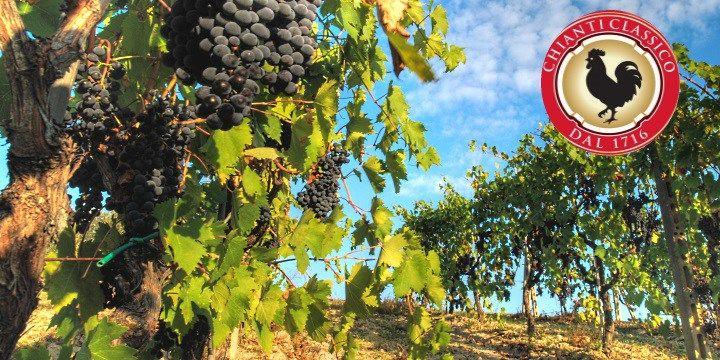 vinjournalen.se -  Vin Fakta : Hur blev den svarta tuppen – Gallo Nero – symbol för vindistriktet Chianti? |  Har du någonsin undrat varför det finns en svart tupp på Chianti-etiketten? Producenterna i det underbara vindistriktet Chianti i regionen Toscana och som framställer det berömda Chianti Classico är mycket stolta över sin svarta tupp – Gallo Nero. Man berättar gärna om den urgamla legenden från 1... http://wp.me/p73gTR-3qA