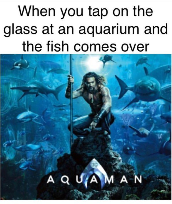 Feelin Like Aquaman Humour Spot Funny Pictures Best Funny Photos Funny Cute