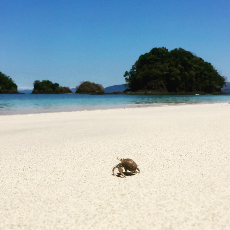 Running towards holidays like this little fellow  #coiba #officewithaview #paradiso
