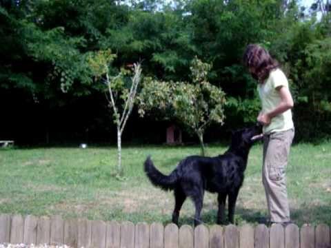 Comment apprendre à son chien à saute dans nos bras