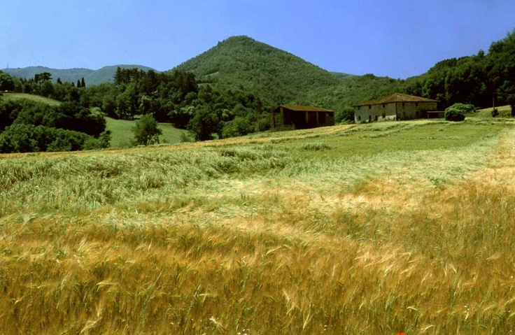 The poetry of wheat fields near Borgo San Lorenzo, Mugello, just 40mins drive from Florence