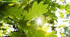 Diese 8 heimischen Bäume haben viel zu bieten! Die besten Anwendungen für deine Gesundheit, Haushalt und Garten!