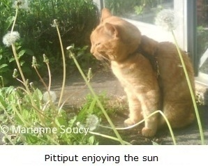Pittiput's last day - and the beginning of Healing Pet Loss http://healingpetloss.com/about/