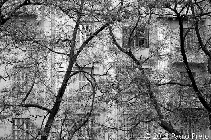Árvores em Santa Cecília