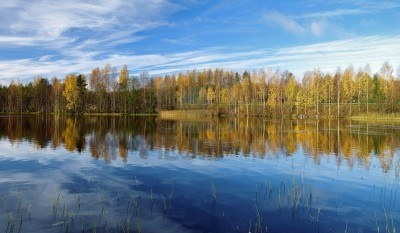 Trees reflecting in the water on the shore of lake at autumn morning.