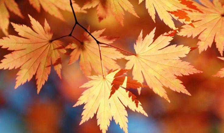 Conserver les feuilles d'automne