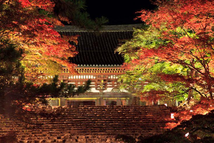 京都PHOTO  - 夜の神護寺!
