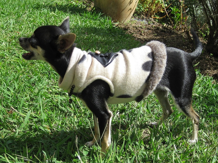 Paw print Black & Tan Harness Vest with chain & spotted neck piece. Fabric ~ Polar fleece for the cooler winter months ahead. Trimmed with faux fur...just because...she deserves a little luxury :) FIFI & BEAU ~ Designer Dog Wear. One-of-a-kind & Limited Edition, quality Dog apparel. We ship worldwide.