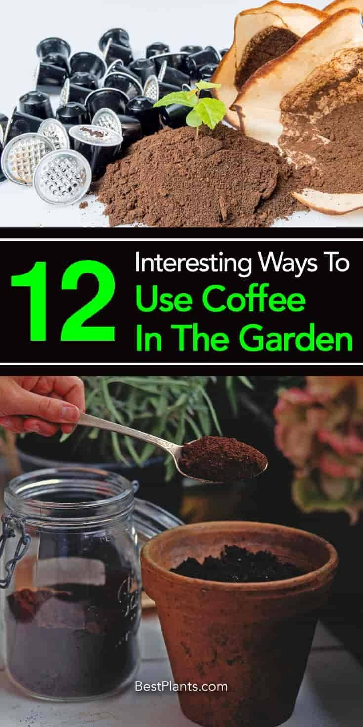 Many Plants Like Coffee Grounds And It Provides Many Uses And Benefits As A Fertilizer Co Organic Gardening Tips Organic Vegetables Uses For Coffee Grounds