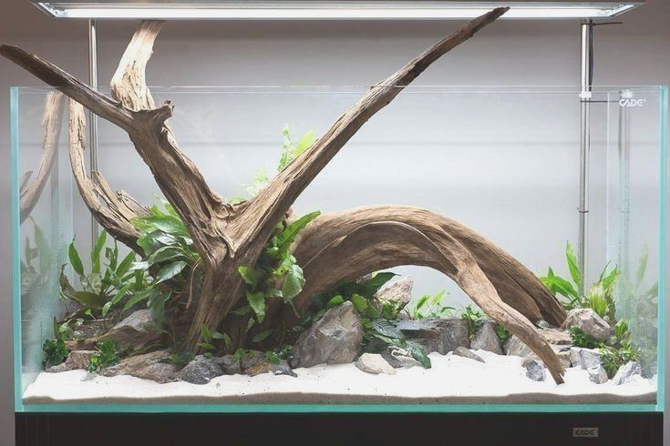 56ea43b87d995133210e7895425289ba - How To Get Driftwood To Sink In Fish Tank
