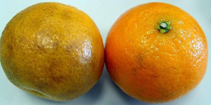 Daños sobre la piel de mandarinas producidas por altas temperaturas de trabajo en los túneles de secado en la línea de confección