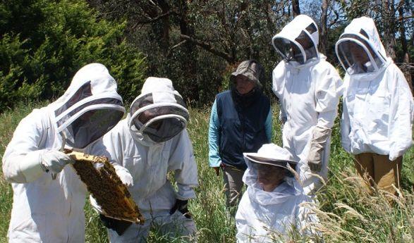 Ορεινή Μέλισσα: Πλήρες μελισσοκομικό Σεμινάριο εντελώς δωρεάν! ΕΚΠΑΙΔΕΥΤΙΚΟ ΒΙΝΤΕΟ ΓΙΑ ΜΕΛΙΣΣΟΚΟΜΟΥΣ