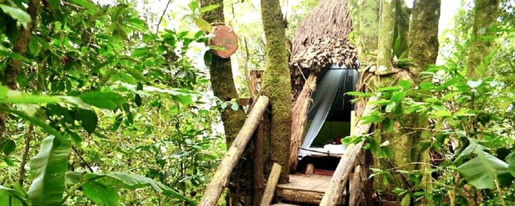 El hotel Tapasoli y sus nidos son una experiencia única que puedes vivir muy cerca del Pueblo Mágico de Xilitla. Descubre todo lo que este lugar tiene para ofrecerte.