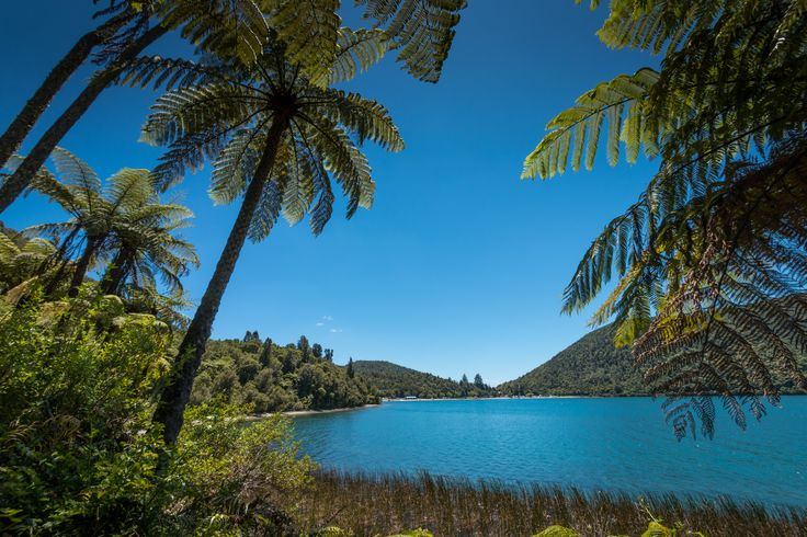Rotorua's Blue lake and surrounding native bush is a stunning place to be in Summer. Purchase a print, cards, or a full size digital file of this image at www.kirkvogel.com