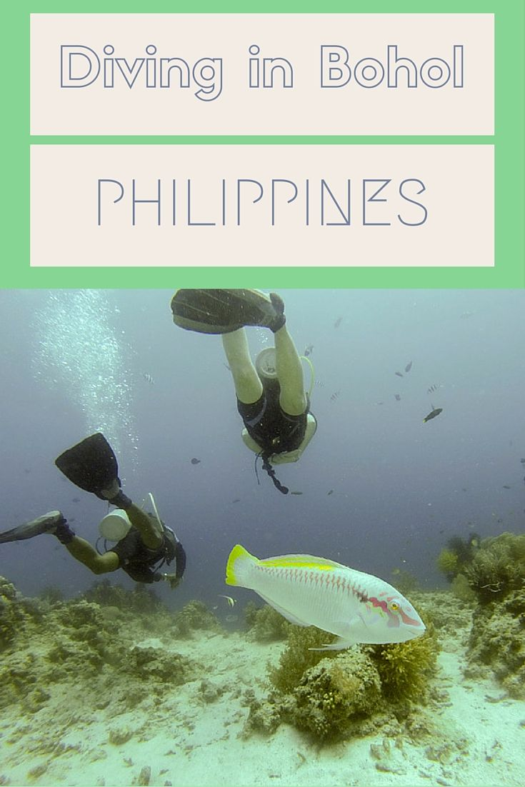 Diving in Bohol and other eco things to do in Bohol and Panglao, Philippines!