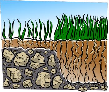 Really great info on lawns!! Read