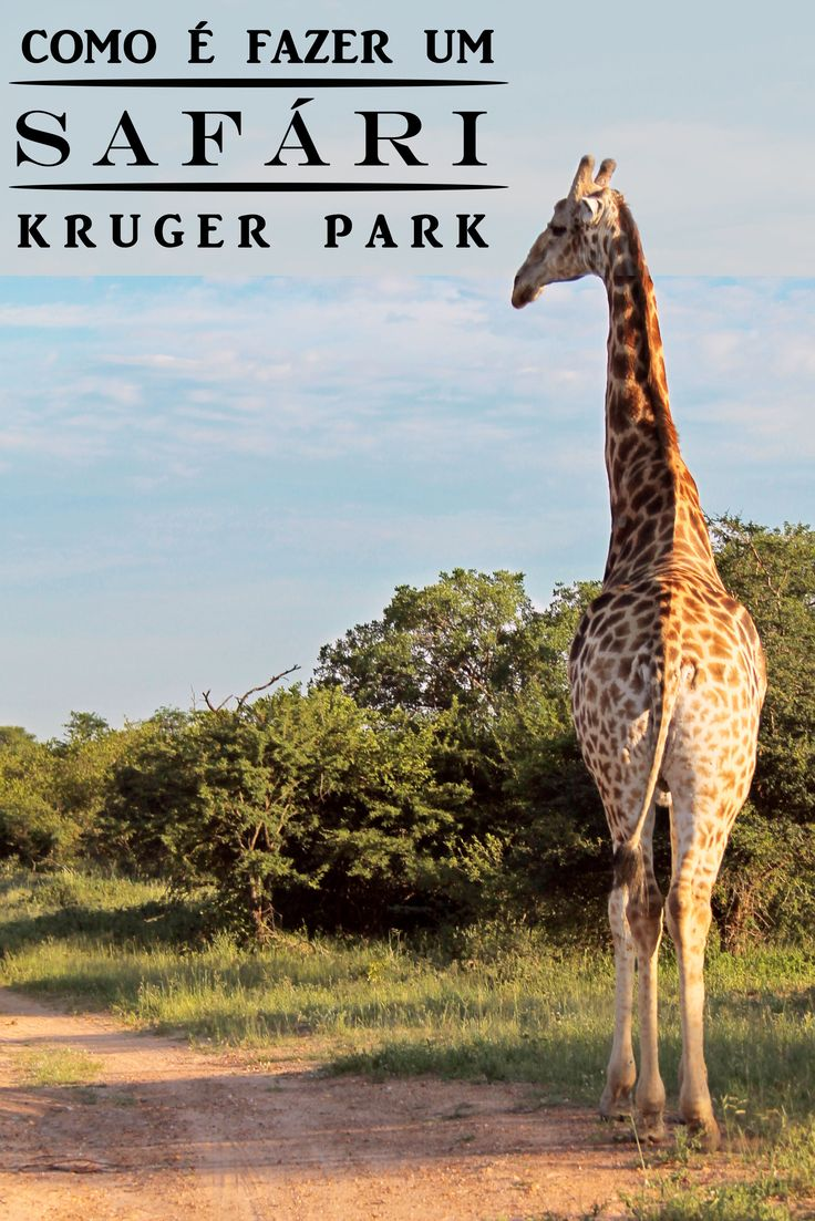 Como é fazer um safári np Kruger Park, na África do Sul