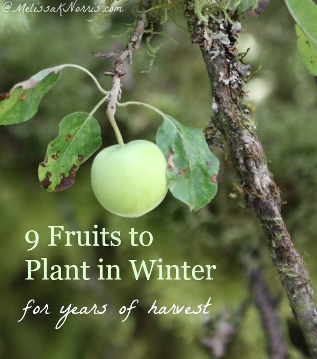 Eager to start gardening but still in winter? These 9 fruits are planted in winter and will provide you with a harvest for years to come. Tips on where to get your stock, how to plant it, even if you don't have any land or a yard! Read this to get your fruit plants in.