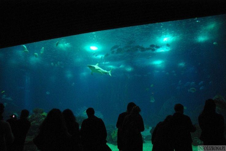 Oceanarium w Lizbonie: http://infolizbona.pl/?p=1907