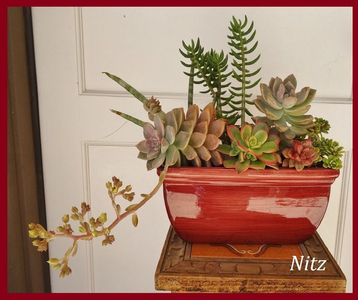 1000+ images about Succulents on Pinterest | Donkeys, Succulents ...