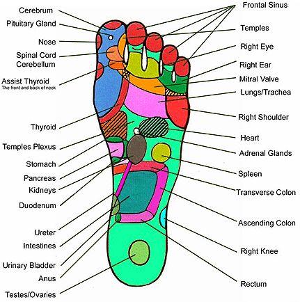 Left Hand Reflexology | Hand Reflexology Chart: