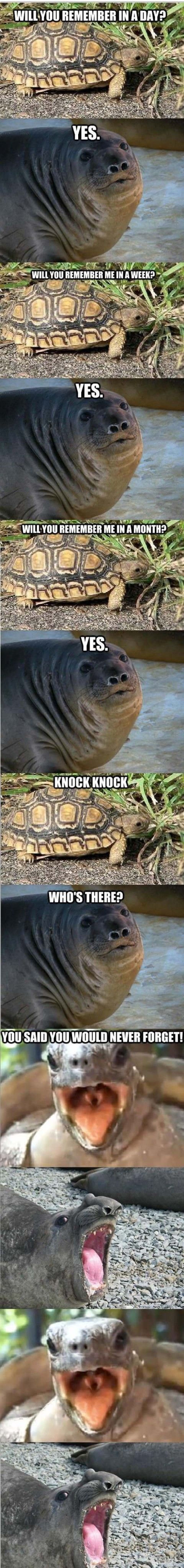 funny animals pictures with captions (56 pict) | Funny Pictures #compartirvideos #funnywhatsapp #videowatsapp