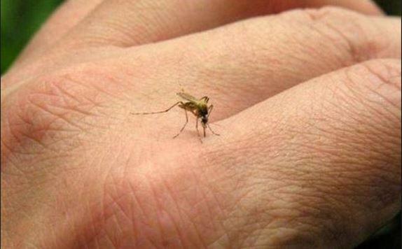 Quels sont les symptômes du virus Zika?