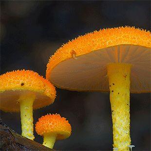 Radically Diverse Australian Fungi Photographed by Steve Axford