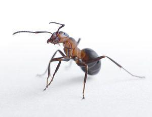 Ameisen Im Wohnzimmer schönsten Images und Ecaeeeaffafffed Ant Colony Space Station Jpg