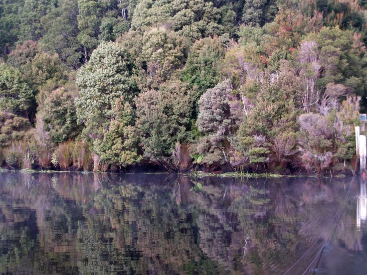 Reflections on the Pieman River