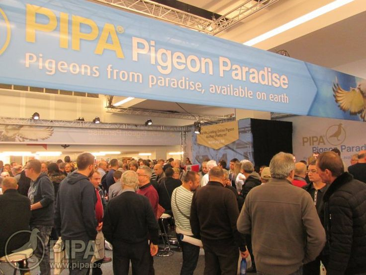 2017 Olympiad and National Days 2016 attract large crowds to Brussels | PIPA