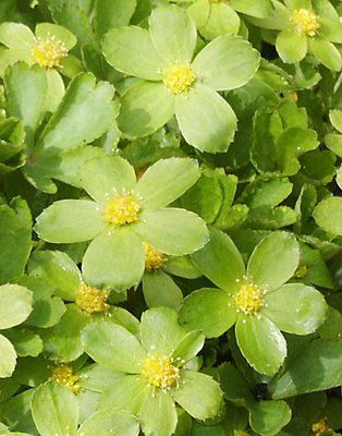 pictures of flowers in green - Google Search